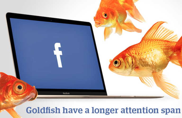 goldfish attention span